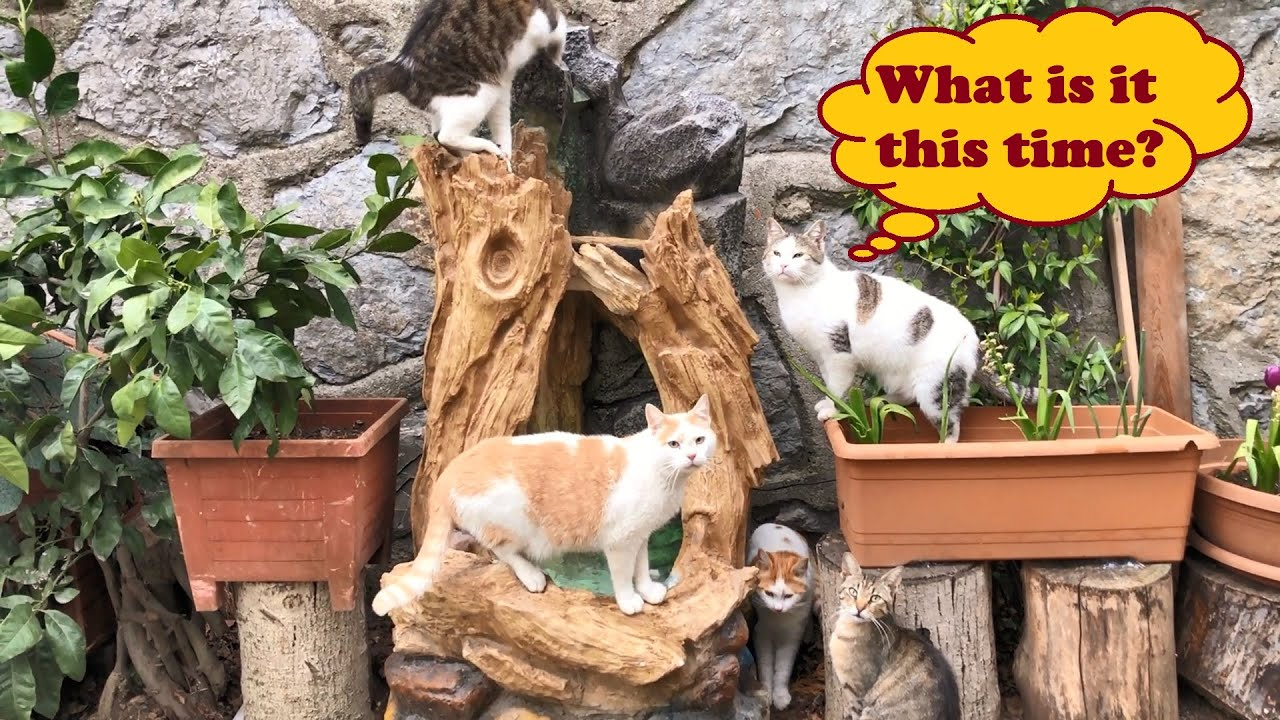 Curious Cats' Reaction to the New Waterfall Fountain!