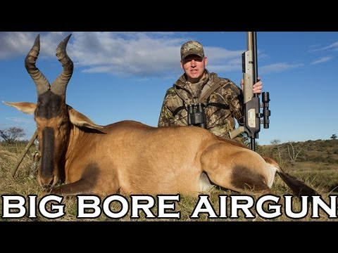 Big Bore Airgun Hunting - Red Hartebeest With The Benjamin Rogue .357