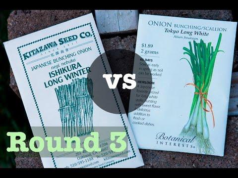 Green Onion Battle, Rd 3: Tokyo Long White vs Ishikura Long Winter