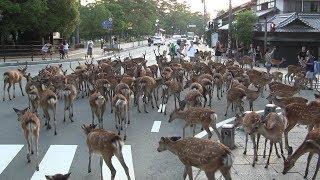 奈良 Nara, Japan