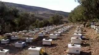 apiculture Maroc, beekeeping