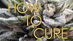 How to Cure Marijuana