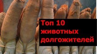 ТОП-10 животных-долгожителей планеты