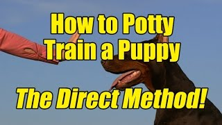 How to Potty Train a Puppy Using The Direct Method!