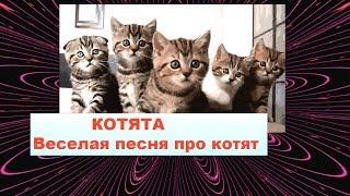 КОТЯТА Веселая песня про котят