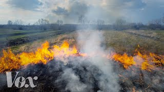How burning a forest can help save it