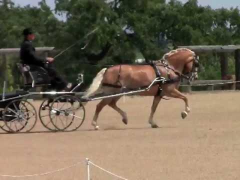 Vineyard Classic 2012 Drew Callahan Intermediate Pony Dressage.mov