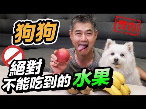 狗狗絕對不能吃到的水果!!!『小心致命』