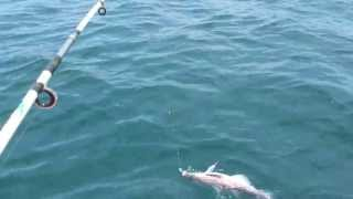 Рыбалка в б.Шамора. Июнь 2013