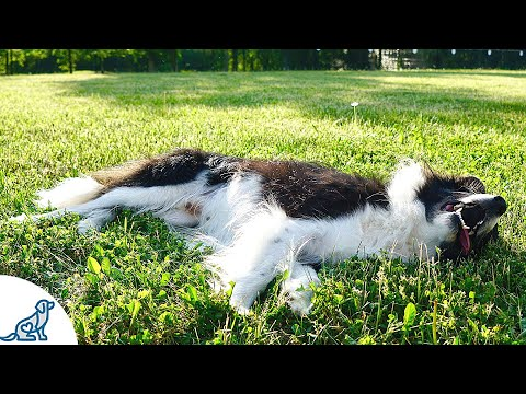 Heatstroke In Dogs- The 5 Signs Dog Owners MUST Know - Professional Dog Training Tips