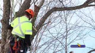 Advanced Tree Care - Ice Storm 2013 & Preventative Maintenance