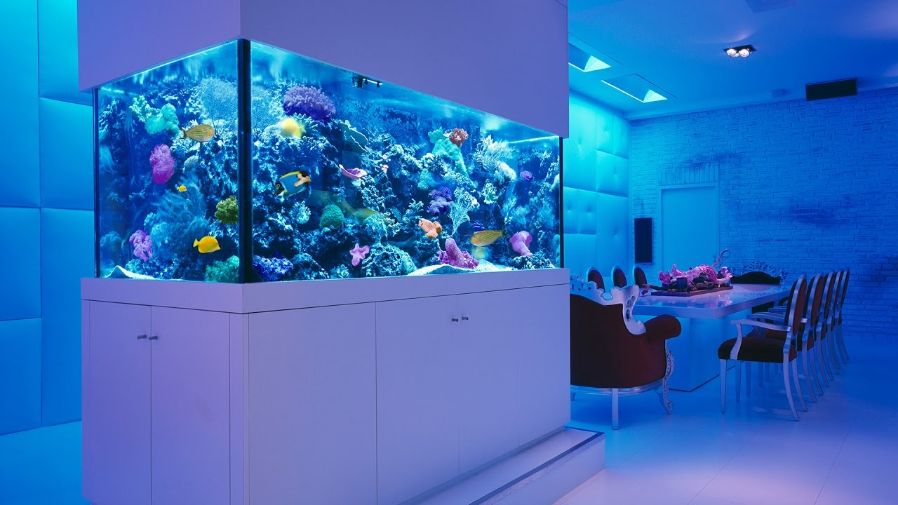 Aquarium Fish Ideas 2017 Creative Home Design Fish Tank And Colors