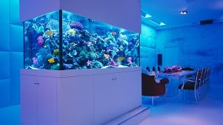 Aquarium Fish Ideas 2017 -  Creative Home Design Fish Tank and Colors