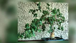 How to Bonsai | How to Grow and Care for Bonsai Tree.