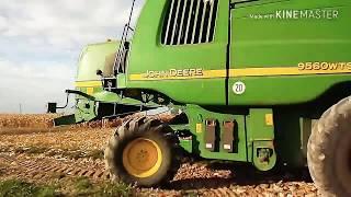 Młócenie kukurydzy i sprzedaż