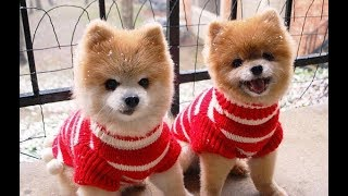 Funny Dog and Cat |  Funny Dog Cat in Costume  - TRY NOT TO LAUGH