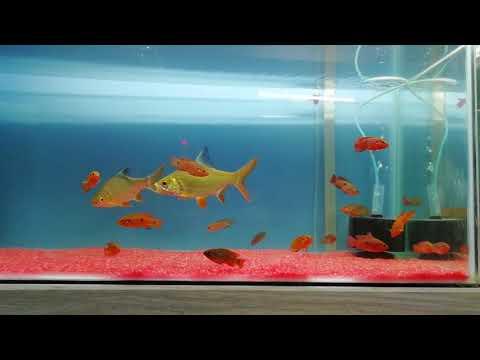 JEWEL FISH TANK 😊