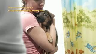 Был щенок уличный А стал домашний усыновление бездомного щенка из приюта Дари добро