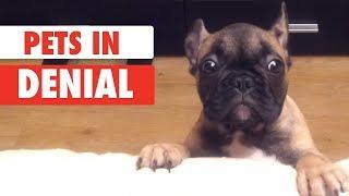 Pets in Denial