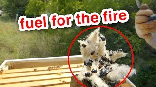 Wow! Look at that... It worked! - Beekeeping Hive Inspection Surprises