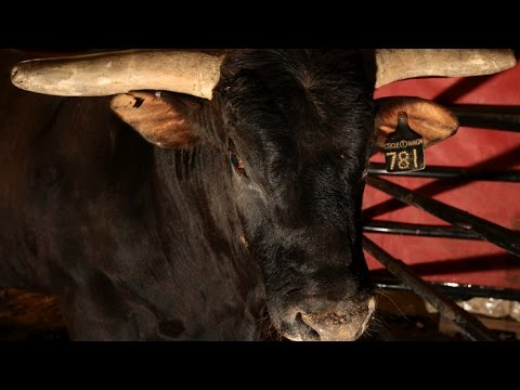 TOP BULL: Joao Ricardo Vieira rides Asteroid - YouTube