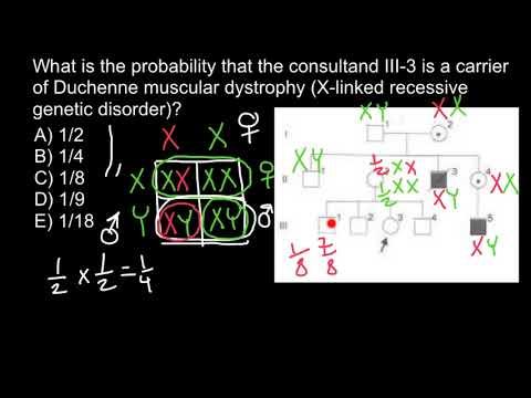 Bayesian analysis of pedigrees 4