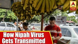 Know How Nipah Virus Gets Transmitted And Its Prevention | ABP News