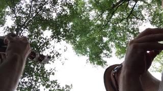 Central Park Ukuleles