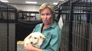 Dogs rescued from South Korea meat farm head to Madison