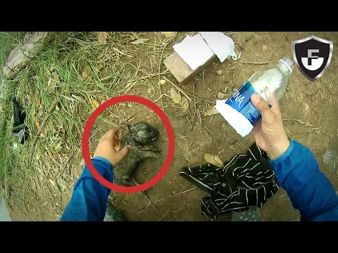 7 Amazing Rescues Caught On Camera