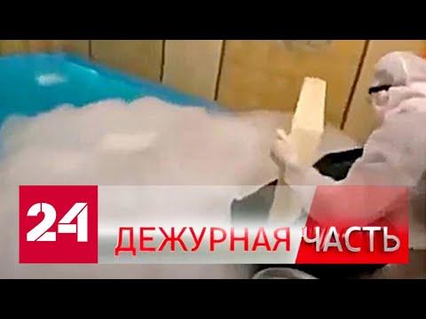 """Вести. """"Дежурная часть"""" от 2 марта 2020 года (17:30) - Россия 24"""