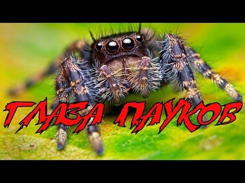 Вопрос: Какие органы чувств есть у пауков?