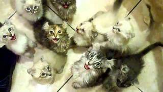 Кормление стаи голодных котов !!!