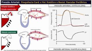 Periferica resistencia fisiologia vascular