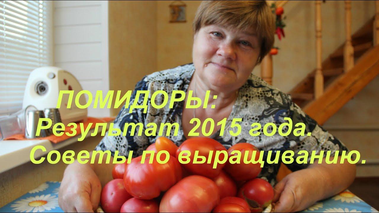 Помидоры: Результат 2015 года. Советы по выращиванию.