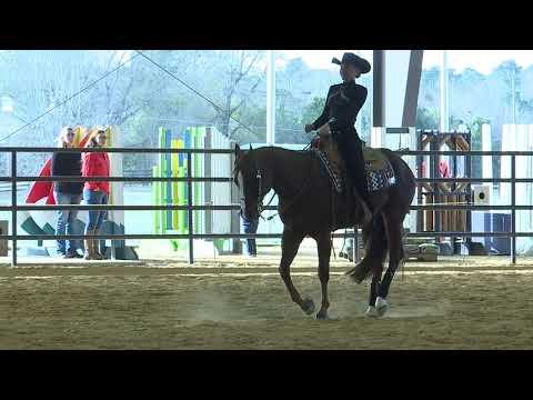 Auburn University Sports - Auburn Equestrian vs UT Martin Highlights