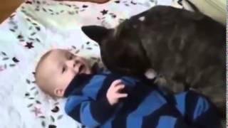 Смешное видео про Собак! Малыш и бульдог  друзья! дети и животные