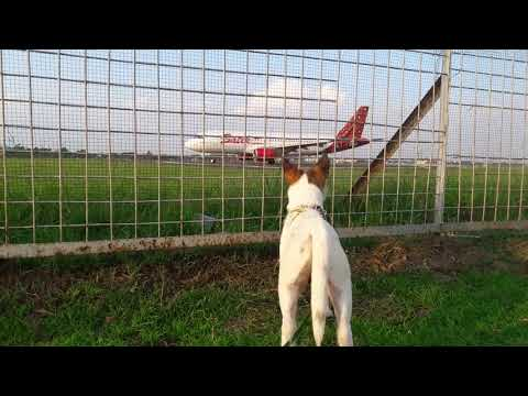 How excited Pepo's the dog seeing an airplane take off