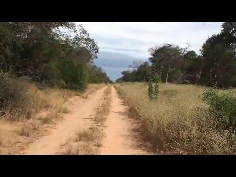 Jaguar en el Chaco Linia Uno