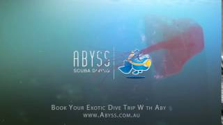 Book Your Exotic Dive Trip With Abyss