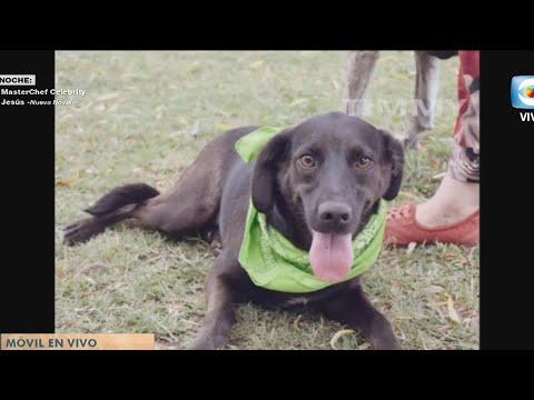 Móvil: Refugio SOS Caninos y Equinos