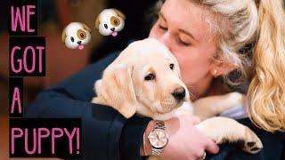 1.  WE GOT A PUPPY YELLOW LABRADOR!!! - Meet Margaux.
