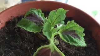 Indoor Experiments & Plants   Gardening V-LOG 12-2-15
