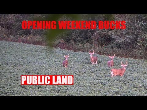 Finding Bucks On Opening Weekend Of Bow Season