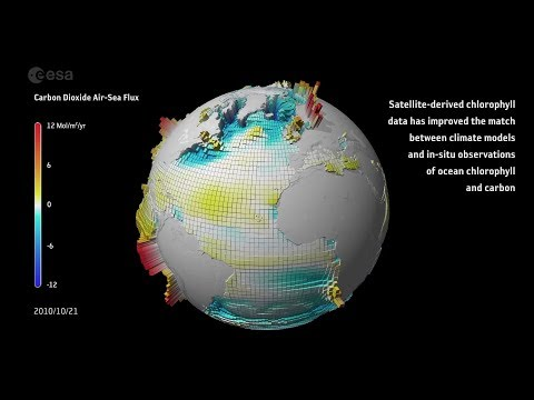 Carbon dioxide ocean–atmosphere exchange