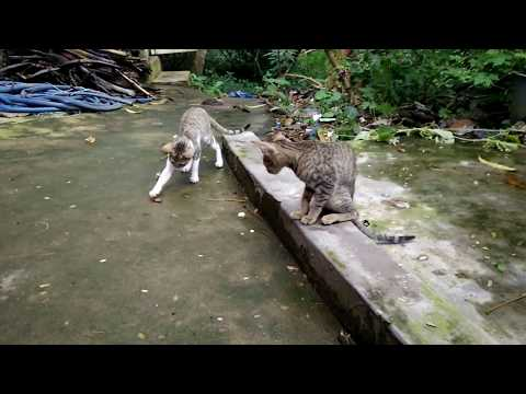 Cat & Cockroach Fight Very Funny