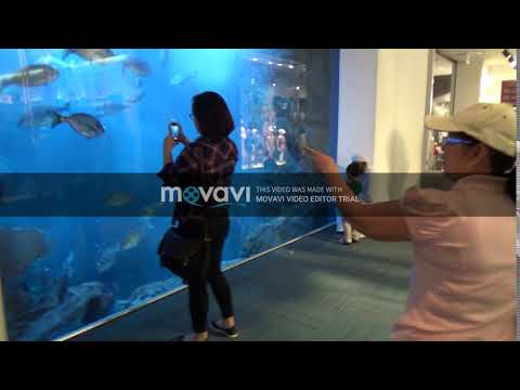 Buhay OFW Travel Buddy –  Discover What is Inside The Dubai Museum