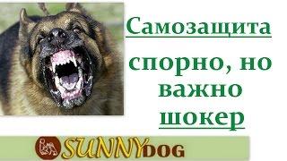 шокер особенности применеия(Бесплатный курс по дрессировки = http://sunny.dog/ - пошаговые бесплатные уроки по воспитанию и дрессировке вашей..., 2016-07-12T09:52:56.000Z)