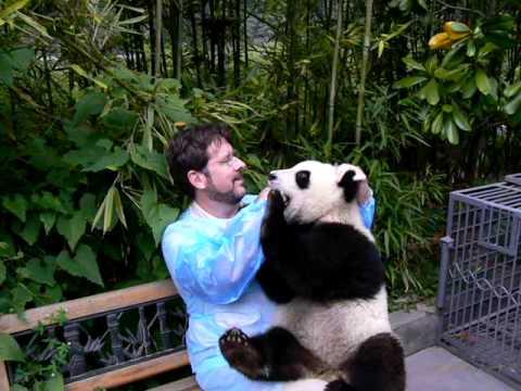 Holding Panda in China