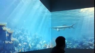 Devonian sea